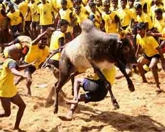 Issue ordinance for conduct of Jallikattu : Panneerselvam to Centre