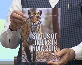 Tiger population increases to 2,967 in 2018: Modi
