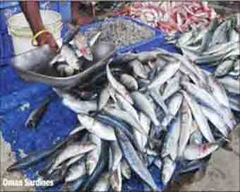 Himachal produces 42,881 tonne fish in four years