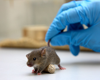 Humans can transmit Covid-19 virus to wildlife: Study